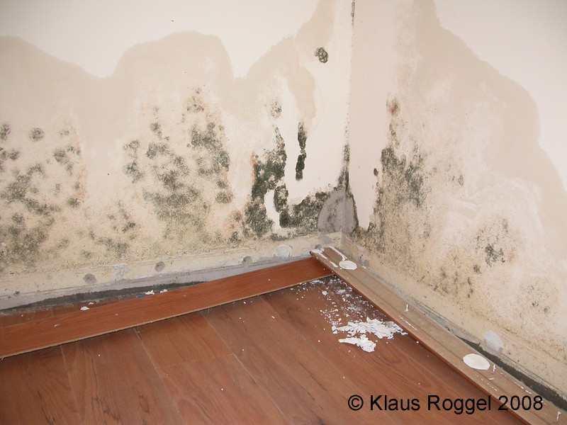 schimmel im wohnzimmer: gardinen u vorh nge und andere, Wohnzimmer